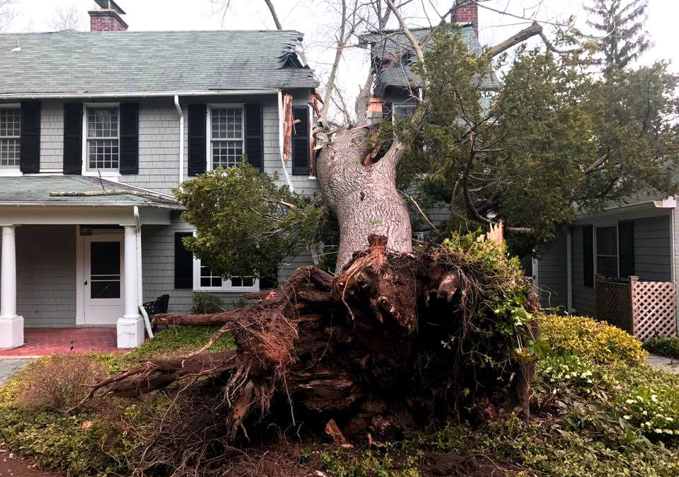 What Does Insurance Cover if a Tree Falls?